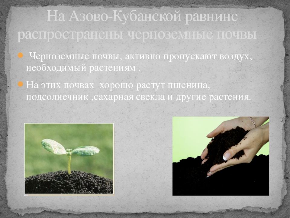 Черноземные почвы, активно пропускают воздух, необходимый растениям . На эти...
