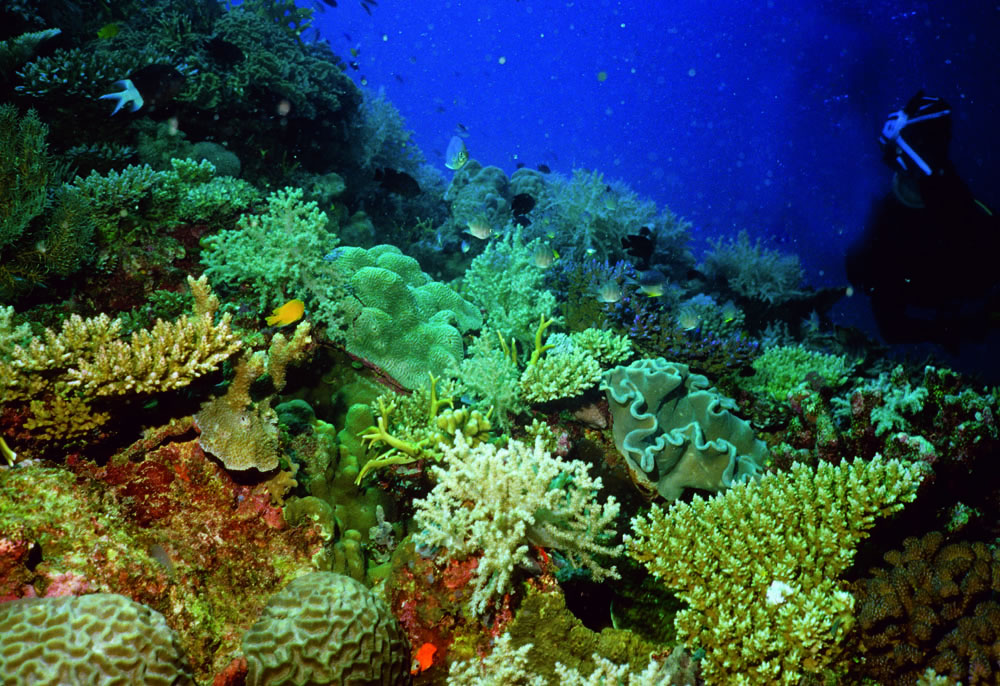 the great barrier reefs coral threats Bleaching threats to the great barrier  to 15 degrees celsius to allow a survival for coral reefs the great barrier reef is not the only one that has.