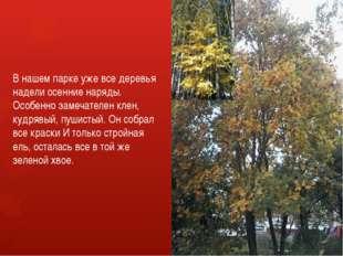 В нашем парке уже все деревья надели осенние наряды. Особенно замечателен кле