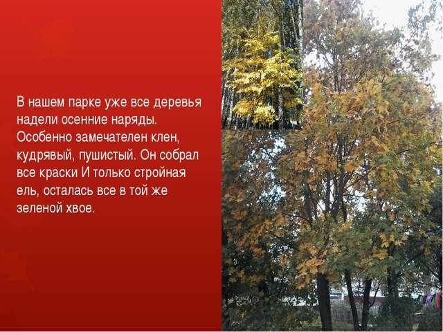 В нашем парке уже все деревья надели осенние наряды. Особенно замечателен кле...