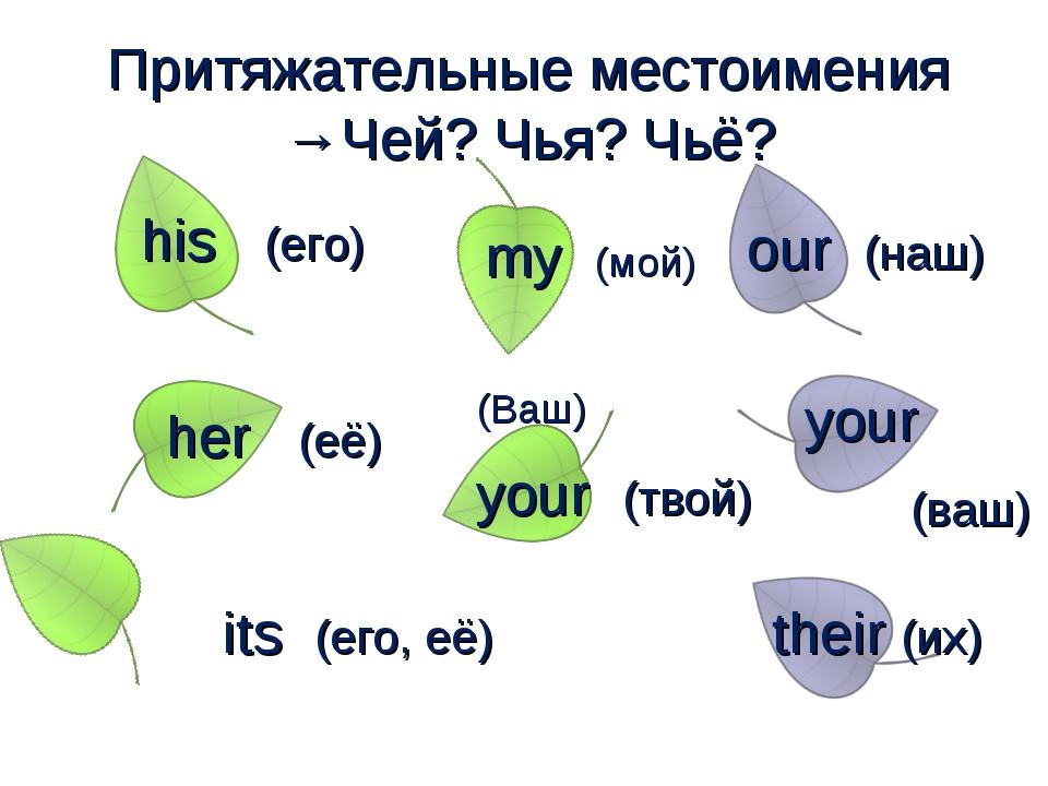 Притяжательные местоимения →Чей? Чья? Чьё? my (мой) your (твой) (Ваш) his (е...