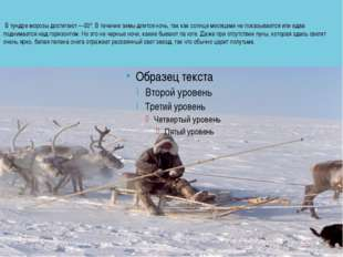 В тундре морозы достигают —50°. В течение зимы длится ночь, так как солнце м