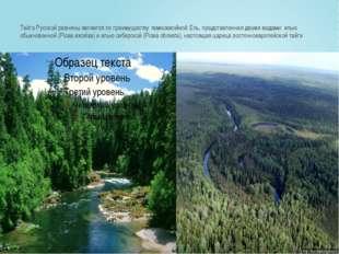 Тайга Русской равнины является по преимуществутемнохвойной.Ель, представлен
