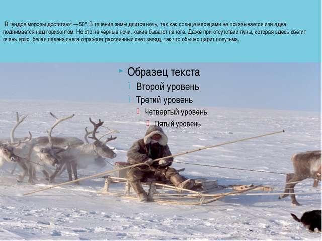 В тундре морозы достигают —50°. В течение зимы длится ночь, так как солнце м...