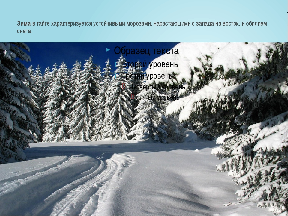 Зимав тайге характеризуется устойчивыми морозами, нарастающими с запада на в...