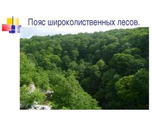 Пояс широколиственных лесов.