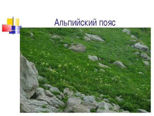 Альпийский пояс