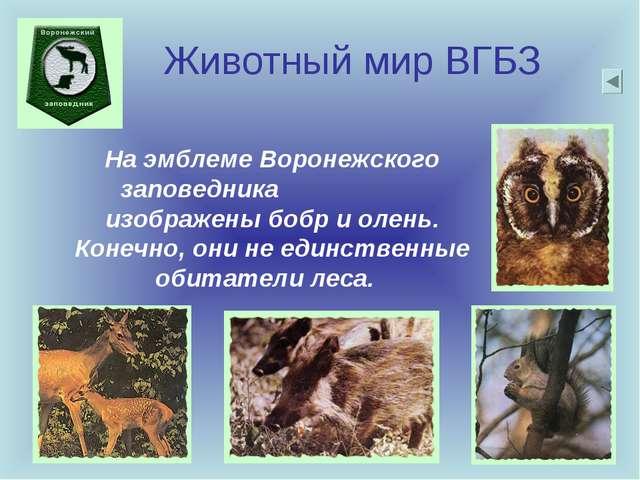 Животный мир ВГБЗ На эмблеме Воронежского заповедника изображены бобр и олень...