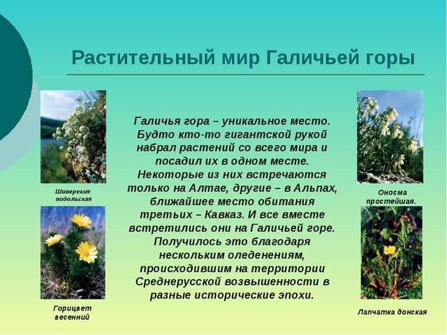 Растительный мир Галичьей горы Шиверекия подольская Горицвет весенний Оносма...