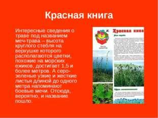 Красная книга Интересные сведения о траве под названием меч-трава – высота кр