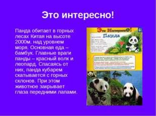 Это интересно! Панда обитает в горных лесах Китая на высоте 2000м. над уровне