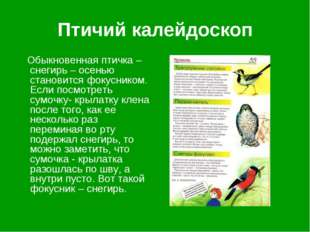 Птичий калейдоскоп Обыкновенная птичка – снегирь – осенью становится фокусник