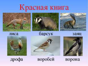 Красная книга лиса барсук заяц дрофа воробей ворона