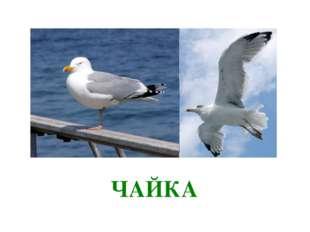 ка ЧАЙКА