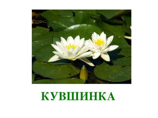 ка КУВШИНКА
