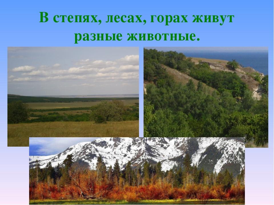 В степях, лесах, горах живут разные животные.