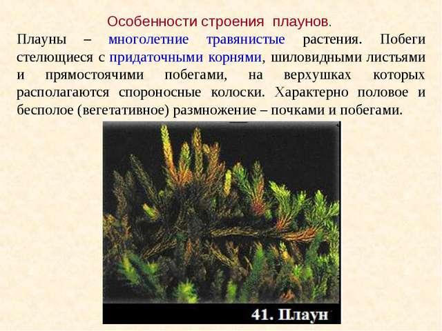 Особенности строения плаунов. Плауны – многолетние травянистые растения. Побе...