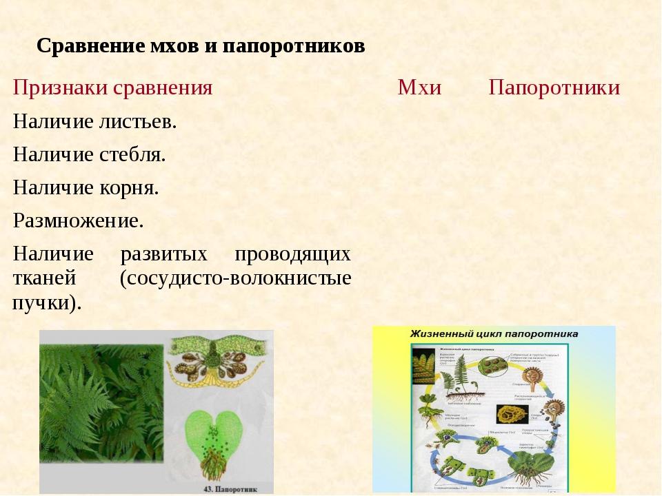 Сравнение мхов и папоротников Признаки сравненияМхиПапоротники Наличие лист...