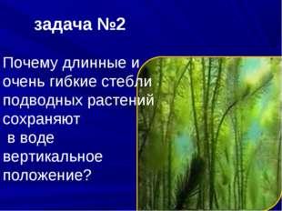 задача №2 Почему длинные и очень гибкие стебли подводных растений сохраняют в