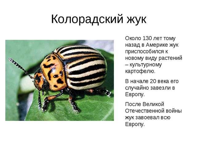 Колорадский жук Около 130 лет тому назад в Америке жук приспособился к новому...