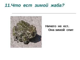 11.Что ест зимой жаба? Ничего не ест. Она зимой спит Ничего не ест. Она зимой