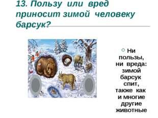 13.Пользу или вред приносит зимой человеку барсук? Ни пользы, ни вреда: зимо