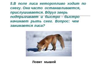 5.В поле лиса неторопливо ходит по снегу. Она часто останавливается, прислуши