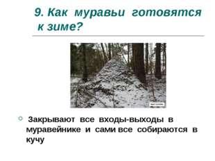 9. Как муравьи готовятся к зиме? Закрывают все входы-выходы в муравейнике и с