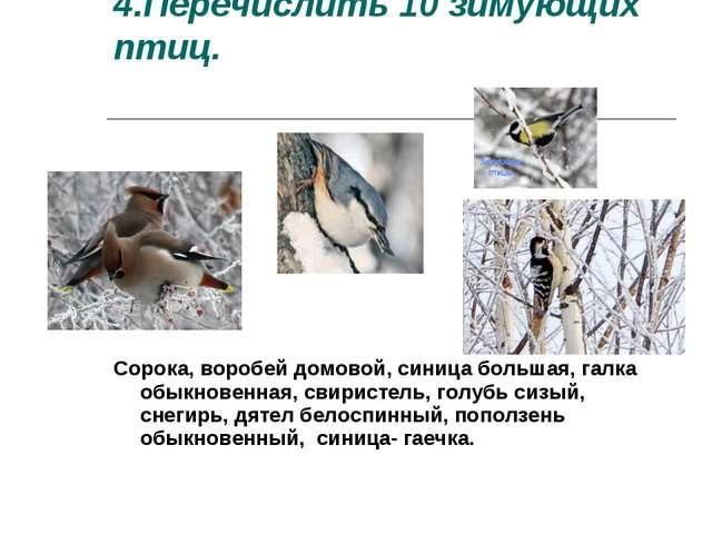 4.Перечислить 10 зимующих птиц. Сорока, воробей домовой, синица большая, галк...