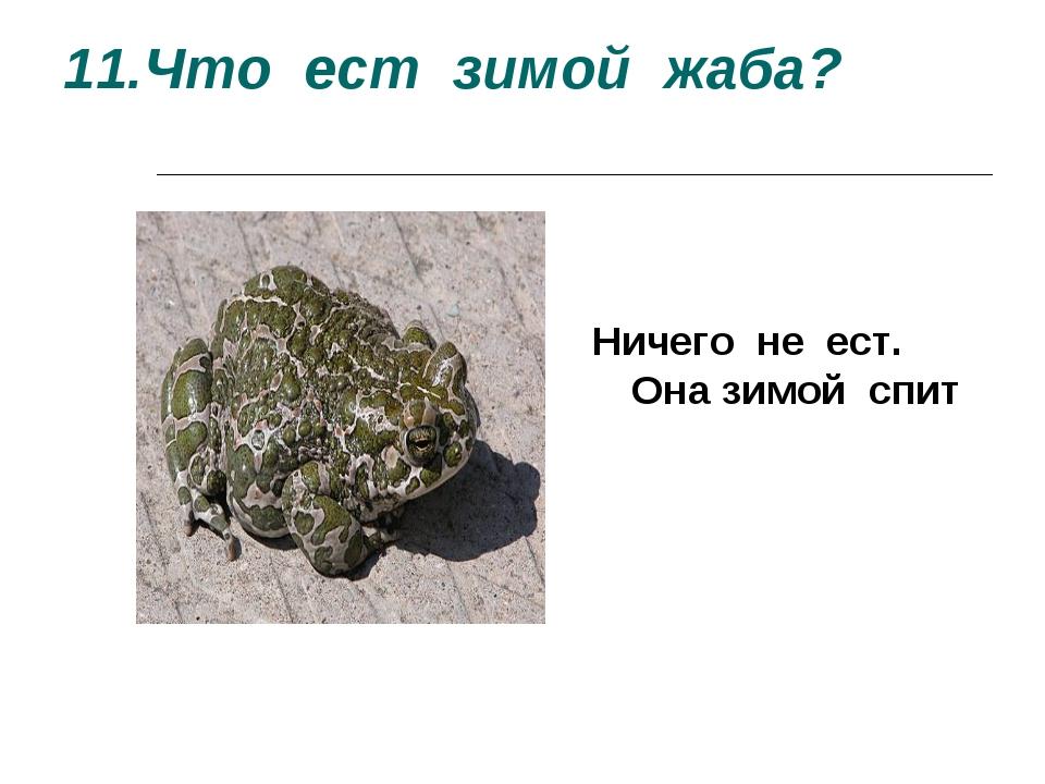 11.Что ест зимой жаба? Ничего не ест. Она зимой спит Ничего не ест. Она зимой...