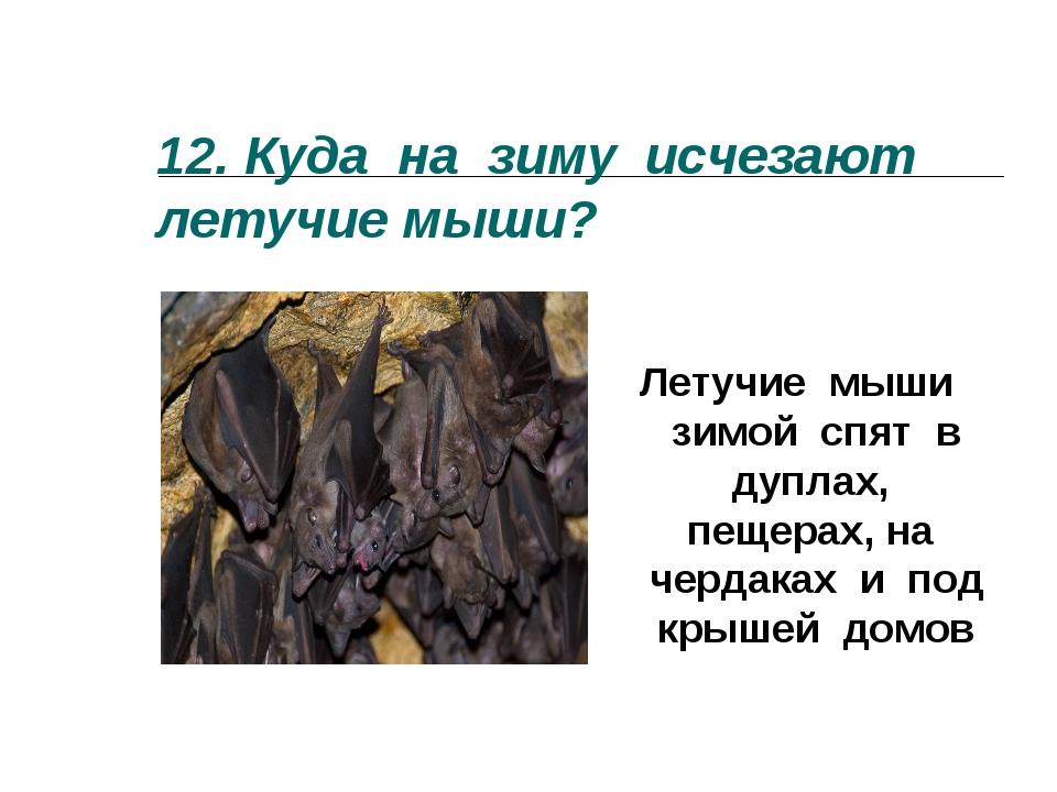 12.Куда на зиму исчезают летучие мыши? Летучие мыши зимой спят в дуплах, пещ...