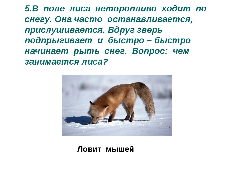 5.В поле лиса неторопливо ходит по снегу. Она часто останавливается, прислуши...
