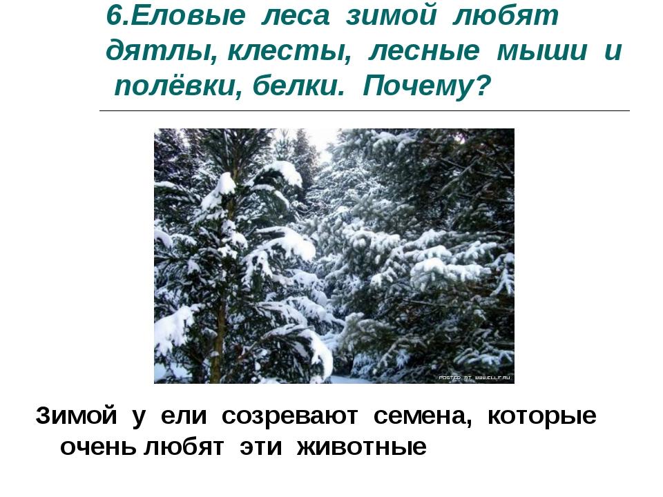 6.Еловые леса зимой любят дятлы, клесты, лесные мыши и полёвки, белки. Почему...