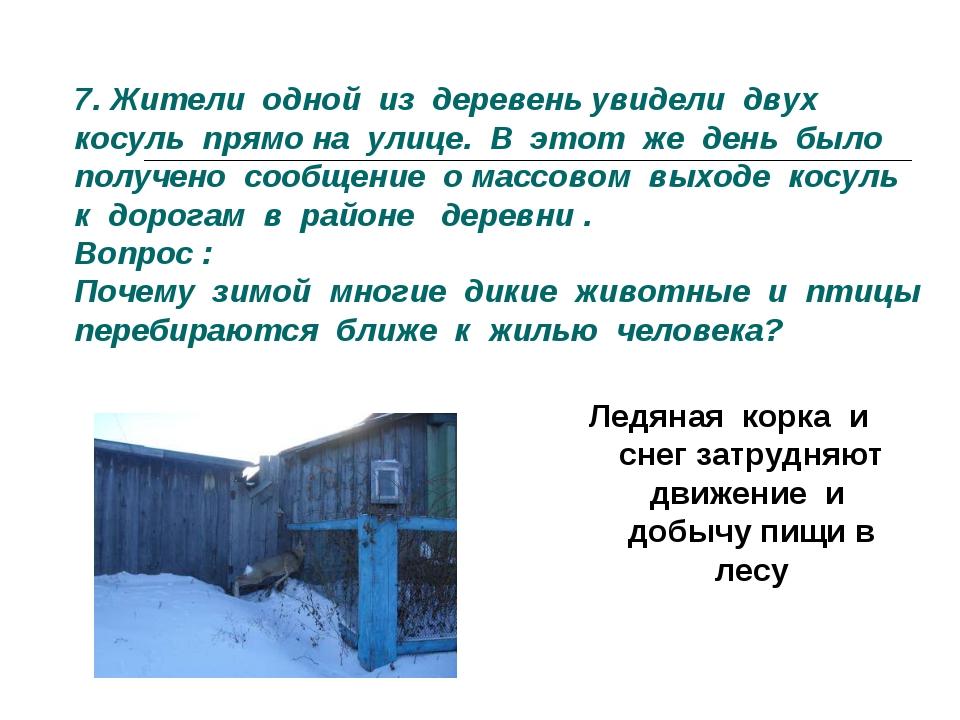 7. Жители одной из деревень увидели двух косуль прямо на улице. В этот же ден...