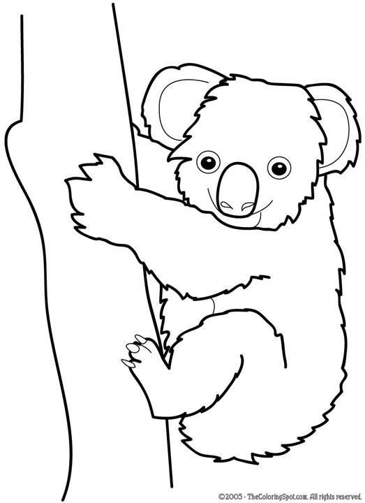 C:\Documents and Settings\1\Мои документы\Мои рисунки\koala.jpg