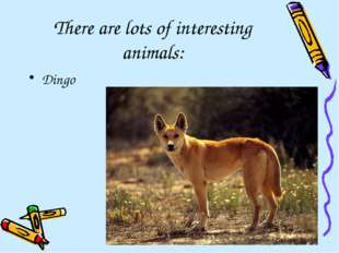 There are lots of interesting animals: Dingo