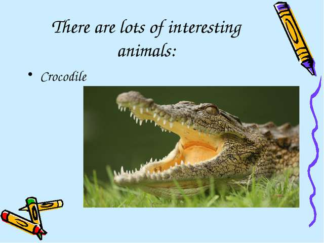 There are lots of interesting animals: Crocodile