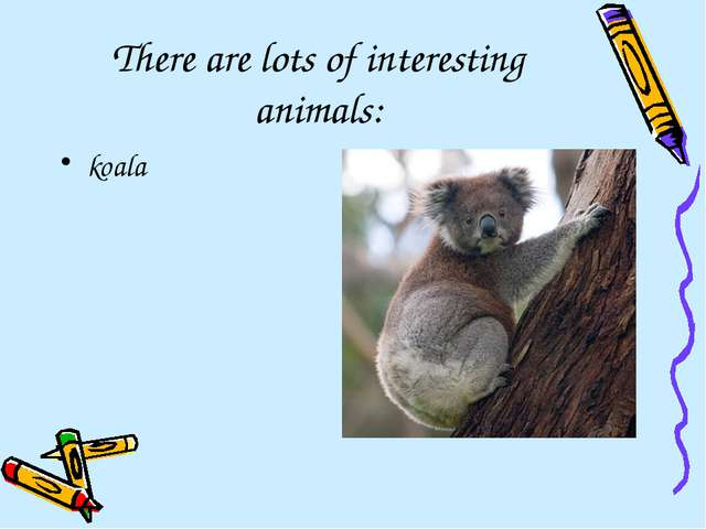 There are lots of interesting animals: koala