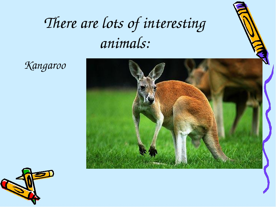 There are lots of interesting animals: Kangaroo