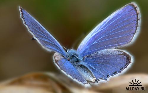 Красивые фото разных видов бабочек