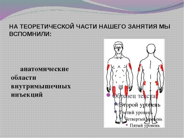 НА ТЕОРЕТИЧЕСКОЙ ЧАСТИ НАШЕГО ЗАНЯТИЯ МЫ ВСПОМНИЛИ:  анатомические области...