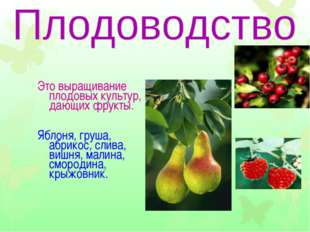 Это выращивание плодовых культур, дающих фрукты. Яблоня, груша, абрикос, слив