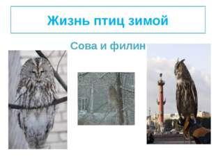 Жизнь птиц зимой Сова и филин