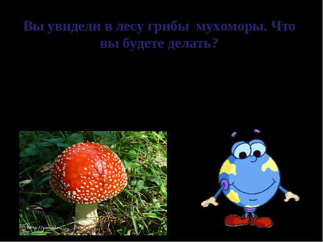 Вы увидели в лесу грибы мухоморы. Что вы будете делать? В природе все взаимос...