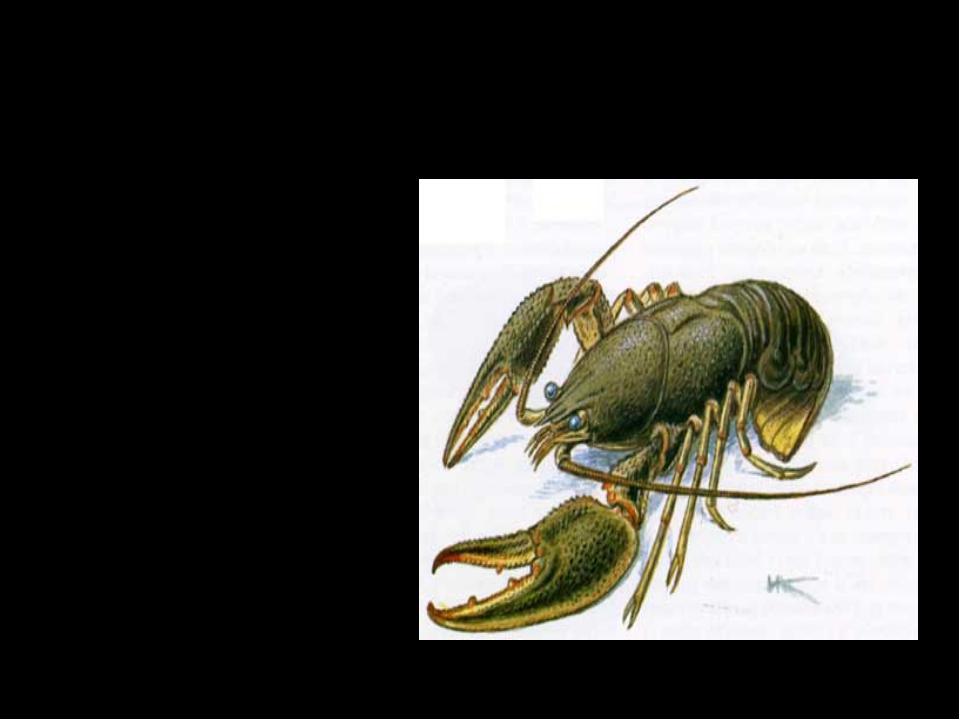 По присутствию какого животного определяется чистота водоемов? Лягушка 2. Уж...