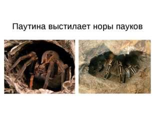 Паутина выстилает норы пауков