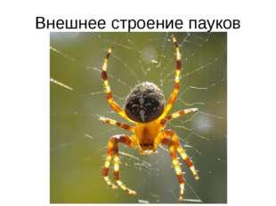 Внешнее строение пауков