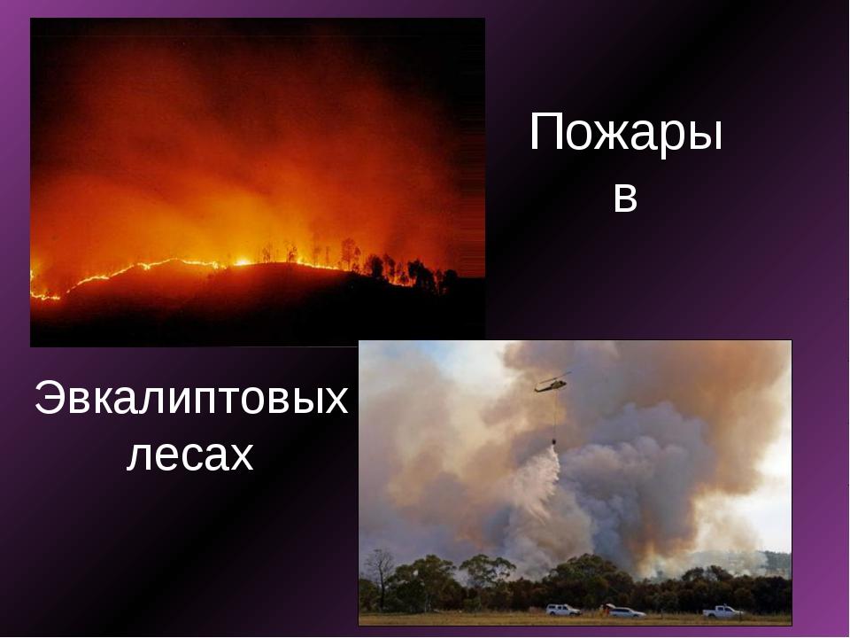 Пожары в Эвкалиптовых лесах