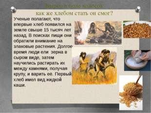 Вырос в поле колосок как же хлебом стать он смог? Ученые полагают, что впервы