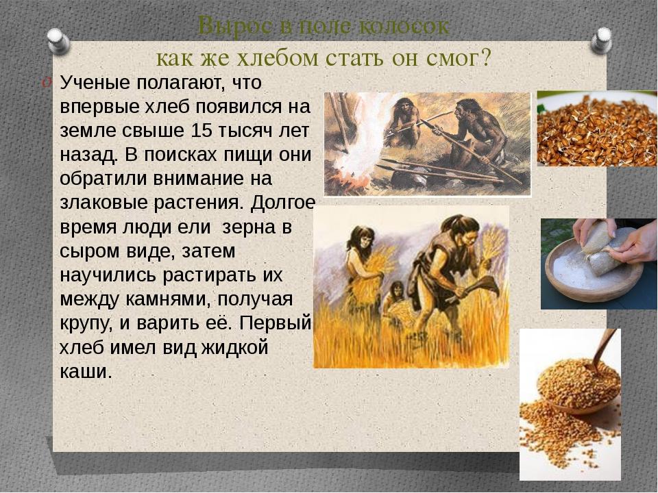 Вырос в поле колосок как же хлебом стать он смог? Ученые полагают, что впервы...